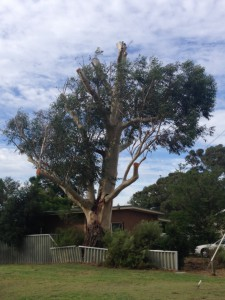 Why use a certified arborist? Because you do not want to end up with this!