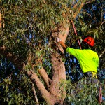 The Benefits that Tree Care Provides
