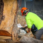 What is an Arborist Report & Why Might You Need One?