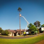 How Can Hiring An Arborist Help You Sell Your House?