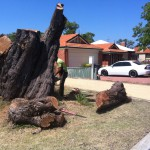 Why You Should Remove the Tree Stump in Your Garden