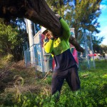 Popular Tree Removal Services