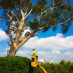 The Importance of a Good Arborist