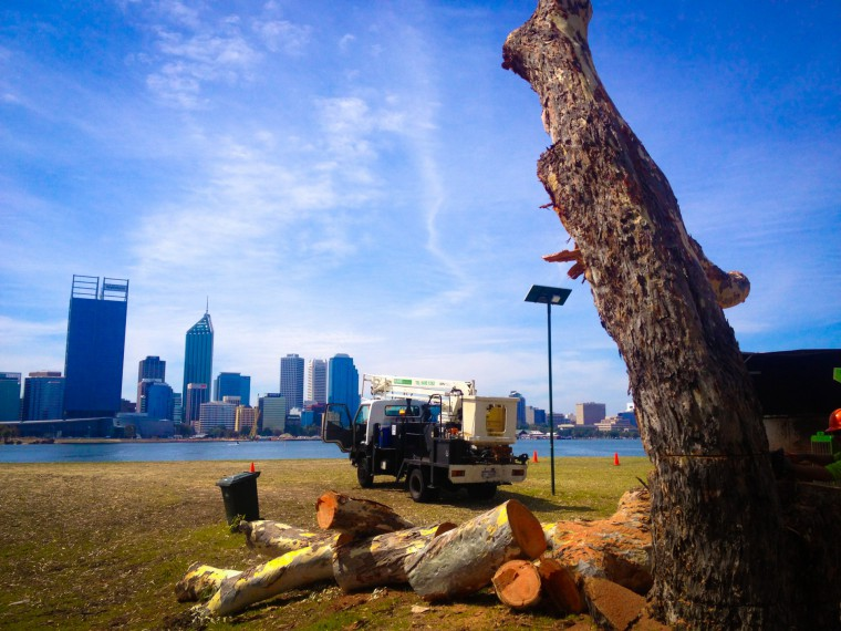 Tree Care — An Essential Service