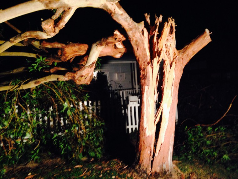 Tree Destroyed by Storm Damage